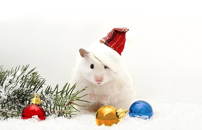 Новогодняя белая крыса 2020